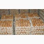 Инкубационное яйцо Бройлера кобб500 и рос308