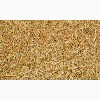 Куплю пшеницу некондиционную, запах, головня, влага