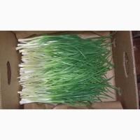 Продам зелену цибулю перо
