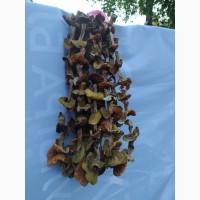 Продам білі гриби, сушені, 3 сорту