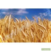 Артемида пшеница озимая елітне