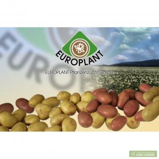 Продаж насіневої картоплі