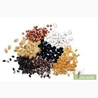 Предлагаю семена овощных культур
