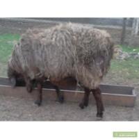 """"""",""""agro-ukraine.com"""