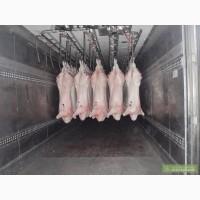 Предлагаю мясо свинины, говядины, телятины