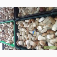 Белый гриб Мороженный