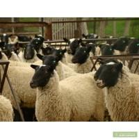 Купим на постоянной основе мясо Свинины, Говядины, Телятины, Баранины