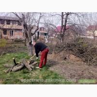Обрезка плодовых деревьев Киев.Удаление, спил растительности