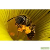 Семьи пчёл для пчеловода