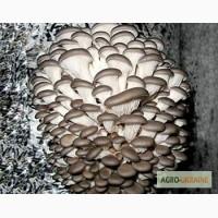 Мицелия грибов и консультации