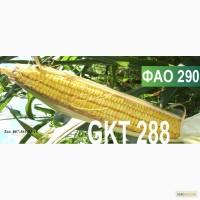 Семена кукурузы Венгерской селекции ГКТ 288 (ФАО 290)
