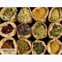 Продам оптом лекарственные травы