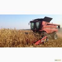 Дорого куплю кукурузу