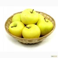 Продажа яблок от производителя