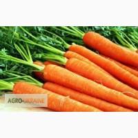 Куплю морковь оптом от 10 тонн