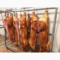Закуповую свиней та свиноматок на мясо живою вагою