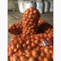 Продам лук репчатый сорт Тареско