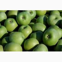 Продам яблука Фуджи, Гринсмит