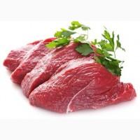 Предлагаю на постоянной основе молодую говядину