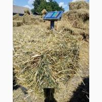Продам 50/50 сено соломы