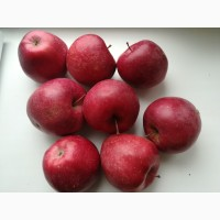 Продам яблоки зимних сортов. Из сада, урожай 2018 г