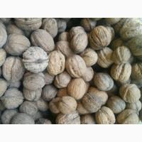 Бойный грецкий орех урожая 2018 года