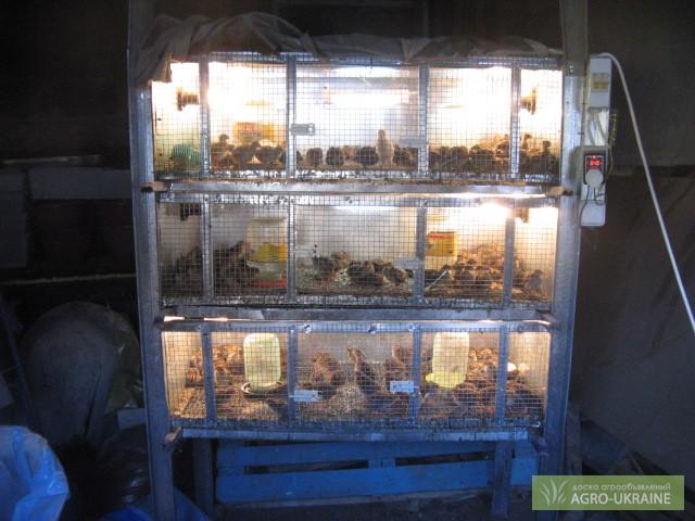 Инкубатор для цыплят своими руками 15