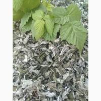 Лист малины сушенный