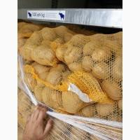 Продаємо картоплю Бельгія