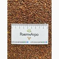 Закупаем: рыжик/ редьку масличную/ лён золотистый и коричневый/ фацелию/ кориандр / просо