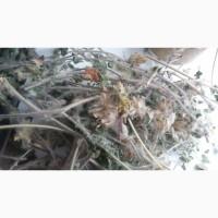 Продам траву астрагала (шерстисто-цветковый)