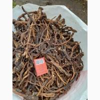Кульбаба, одуванчик корінь