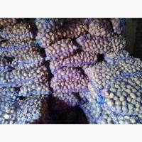 Продам посадочную картошку.сорта разные