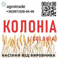 Семена озимой пшеницы Колоніа (Colonia) от производителя в Харьковской области, Агротрейд