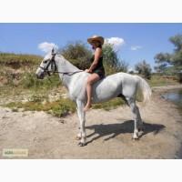 Продам или обменяю на пони серого мерина, 7 лет