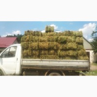 Продаю сено солому