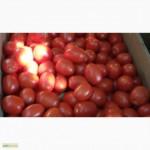 Продам помидор Пьетро Россо