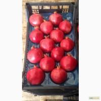 Фрукты и овощи от фабрики производителя в Турции