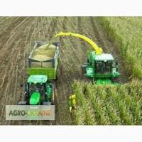 Услуги силосоуборочного комбайна Ягуар, уборка кукурузы на силос сенаж