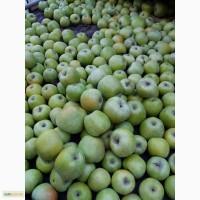 Продам яблука без парші, не градобойні, хорошої якості.Сорта:семеринка, флоріна, ліза, айдарет