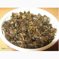 Продам высококачественный пчелиный майский подмор
