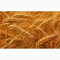 Закупка зерновые