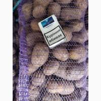 Продаём картофель Мелоди