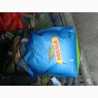 Продам семена кукурузы ДКС 5276