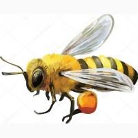Куплю пчелопакеты 1200грн(10штук)