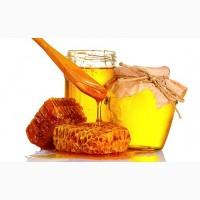 Компанія ГОЛД ХАНІ закуповує мед