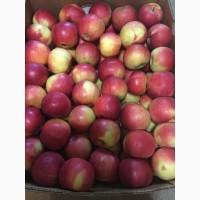 Продам яблука сорт айдаред, 40 тонн