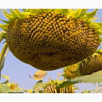 Мікродобриво Комплекс Олійний листове підживлення соняшника