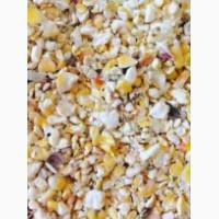 Закуповуємо кукурудзу некондицію