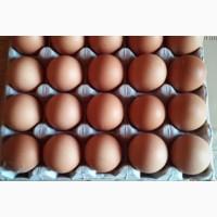 Продам яйца куриные столовые